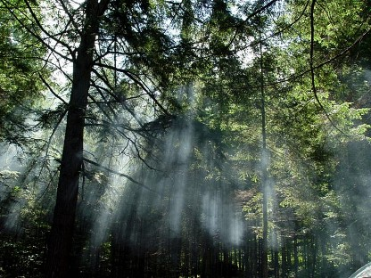 flora da amazônia iluminada pela luz solar.