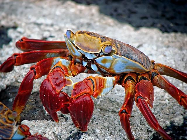 Quais são os crustáceos?