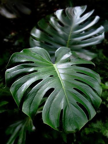 plantas de jardim que gostam de sombra de luz quanto de rega, para