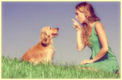 Dicas de adestramento para cães.