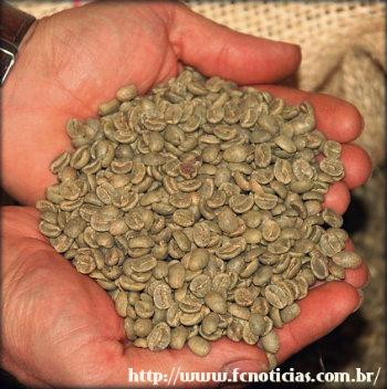 Novo aliado a dieta: Café verde