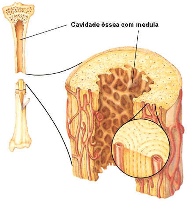 Exame da medula ossea
