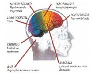 Divisão do cérebro