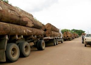 A retirada de madeira -> Motivos do desmatamento