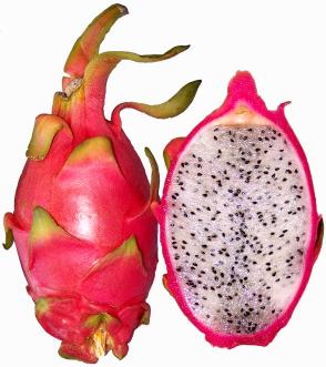 fruto da rainha da noite