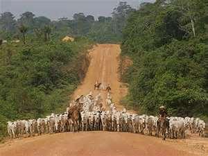 Pecuária -> Uma das causas do desmatamento